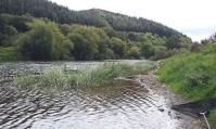 River Wye, nr. Mordiford